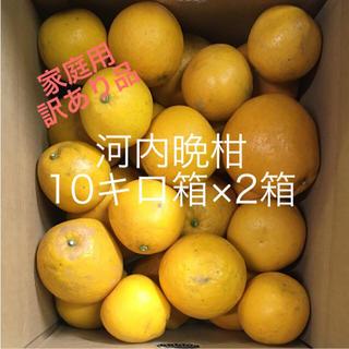 河内晩柑10キロ箱×2箱(正味重量16キロ)(フルーツ)