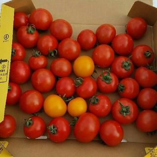 トマト フルティカ、イエローオーレ、シンディオレンジ(野菜)