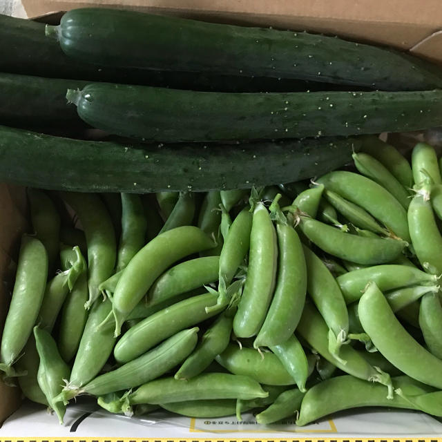 ハートキュウリとスナップエンドウ 食品/飲料/酒の食品(野菜)の商品写真