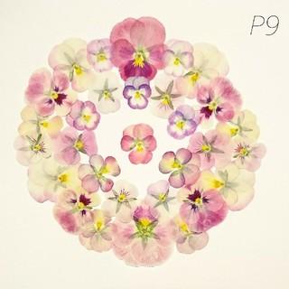 【P9】ピンクのビオラ 押し花 ベビーピンク(ドライフラワー)