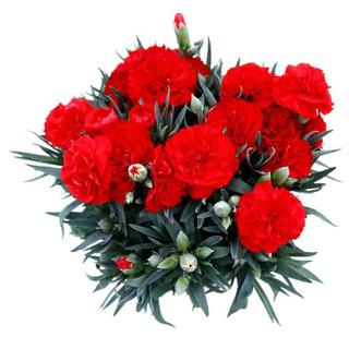 金賞農家のカーネーション「赤かピンク」◆母の日のプレゼントはやっぱり生花!5号鉢(プランター)