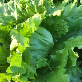 成田市産「サラダ野菜詰め合わせ」80サイズ(栽培期間中無農薬、無化学肥料)(野菜)