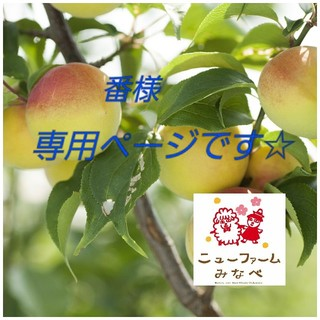 4 ©️©️©️様専用 南高梅の青梅(フルーツ)