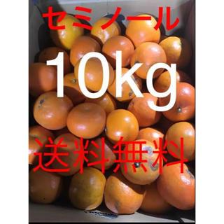 和歌山県 傷あり訳ありセミノール10kg(フルーツ)