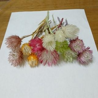 ドライフラワー 花材☆シルバーデイジー6色(ドライフラワー)