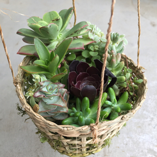 【ハンギングバスケット】どっさり多肉植物🌱クッションモス寄せ植え🌱(その他)