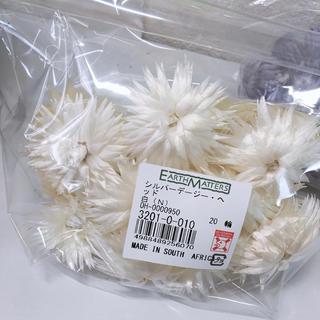 シルバーデージーヘッド20輪入り→1300円‼️(ドライフラワー)