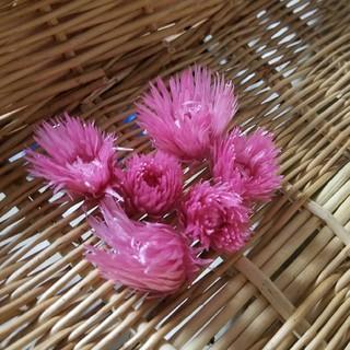 ハーバリウム花材 シルバーデージー(ドライフラワー)