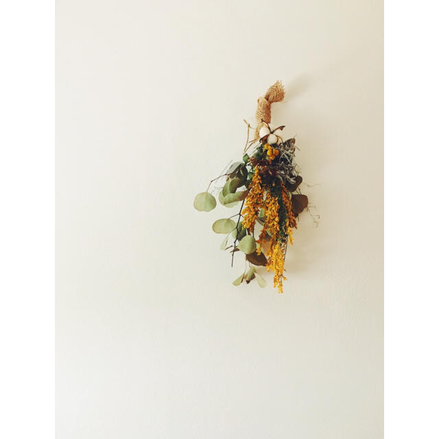 ユーカリ・ポポラス エニシダのスワッグ ハンドメイドのフラワー/ガーデン(ドライフラワー)の商品写真