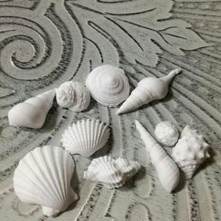 アロマストーン 貝殻12p