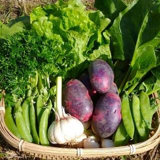 我が家の無農薬野菜 春の新じゃがデストロイヤー80サイズ2500円(野菜)