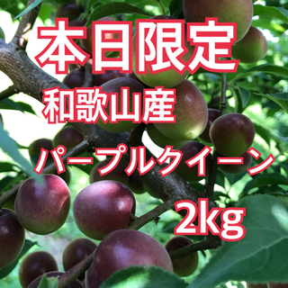 朝どり パープルクイーン 小梅 2キロ 最終!