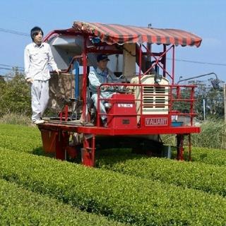 無農薬 ティーバッグ 和紅茶 オーガニック 国産(茶)