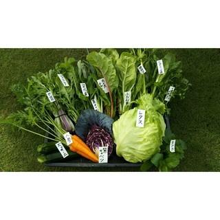 採れたて♪土からこだわったお野菜80サイズ(野菜)