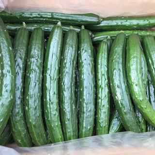 【農家直送】【朝採り】岩手県産 ハウス栽培きゅうり 約5Kg以上(野菜)