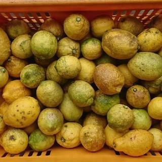 わっくんさん専用  広島県産 訳あり レモン3キロ(フルーツ)