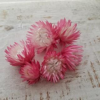 ハーバリウム花材 再販 シルバーデージー(ドライフラワー)
