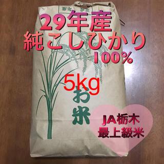 コシヒカリ 5kg +冷凍いちご1.5kg(米/穀物)