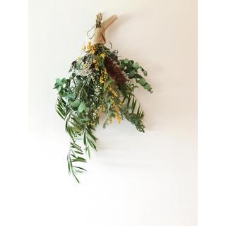 ブラシの木 ユーカリ ミモザ  オリーブのスワッグ   (ドライフラワー)