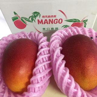 鹿児島県産完熟マンゴー 良品2L2個入 贈答対応(フルーツ)