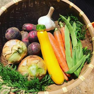 【チルド代込み】夏カレーにぴったり!渥美半島から直送!収穫彩野菜バスケット【S】(野菜)