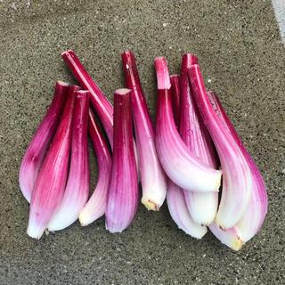 紫らっきょう エシャロット 1kg 泥付き(野菜)
