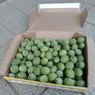 発送日に収穫! 白加賀梅 梅 青梅 無農薬 約1.3キロ(フルーツ)