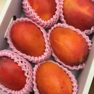 【7月中旬発送】台湾産完熟アップルマンゴー 価格破壊!!(フルーツ)