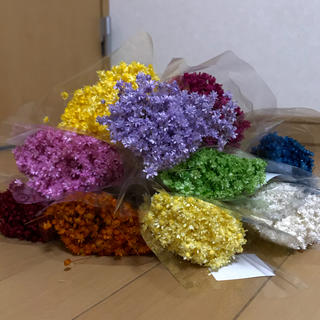 スターフラワー  マルセラ 100本 花材 ドライフラワー(ドライフラワー)