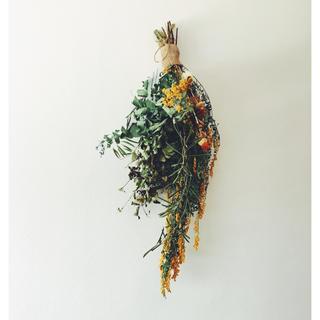 ミモザ  ユーカリ 紅花のスワッグ ノスタルジア(ドライフラワー)