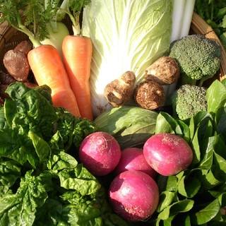 ☆嬉しい100サイズ☆岡山産 新鮮野菜(野菜)