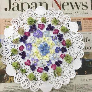 紫陽花💜花びらドライとオレガノヘッド(ドライフラワー)