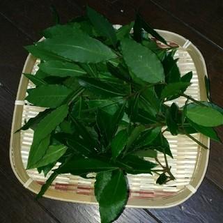 国産☆無農薬フレッシュローリエ150枚(野菜)