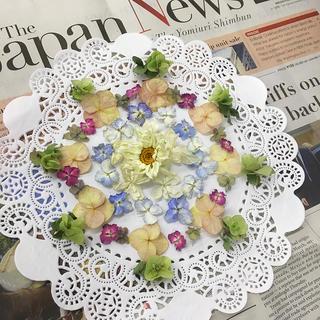 紫陽花💜花びらドライとオレガノケントビューティードライヘッド(ドライフラワー)
