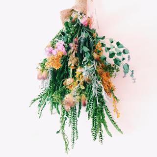 ネムノキ ユーカリ ミモザ 紅花 のスワッグ(ドライフラワー)