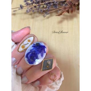 ドライフラワーリング ♡4点セット♡ ブルー&ホワイト大ぶりリングで爽やかに〜(リング)