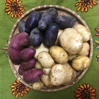 ジャガイモ3キロ 無農薬野菜 送料込み(野菜)