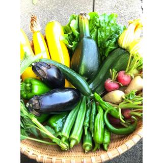 夏野菜セット(野菜)