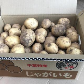 【6月中の特別価格】成田市産・新じゃがいも「トウヤ10kg」(野菜)
