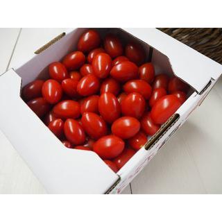 熊本産 ミニトマト 「アイコ」 1.5k 送料込 (野菜)