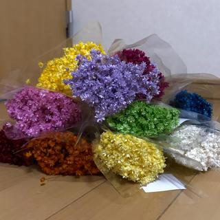 スターフラワー ミニ マルセラ花材 ドライフラワー 100本(ドライフラワー)