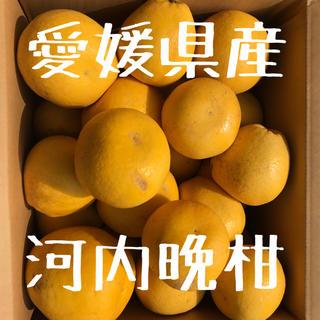 河内晩柑 愛媛県産 7キロ(フルーツ)