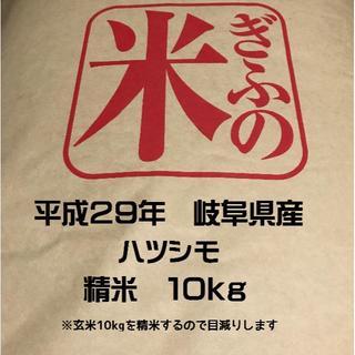 お米 ハツシモ 岐阜県産 玄米10kgを精米してお届けします