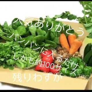 大人気ありがとう夏野菜詰め合わせ(野菜)
