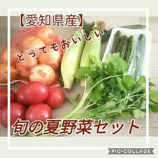 【愛知県産】旬の夏野菜詰め合わせセット