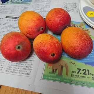 農家直送家庭用完熟マンゴー(約850g)(フルーツ)