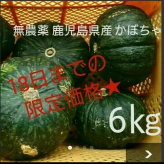【無農薬】鹿児島県指宿産 かぼちゃ 6㎏ 収穫量全国2位 ブランドカボチャ