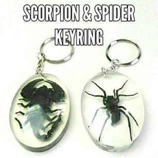 サソリ&蜘蛛 キーホルダー標本 新品未使用(キーホルダー)