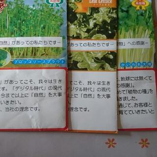 野菜種×3(プランター)
