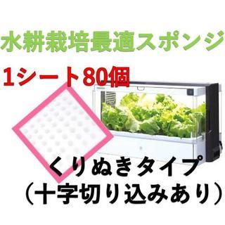 ★【期間限定】お得割5シートセット 水耕栽培用 スポンジ  くりぬきタイプ  (その他)